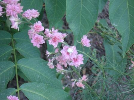 Цветы и деревья краснодарского края