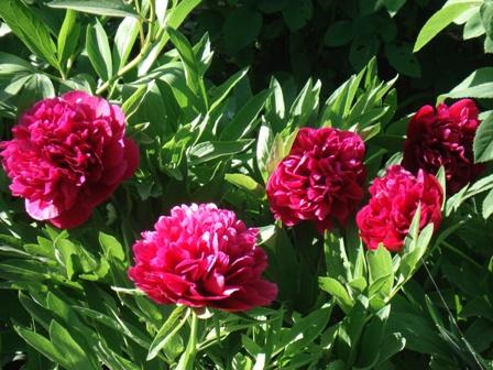 Цветы дикорастущие краснодарского края 68