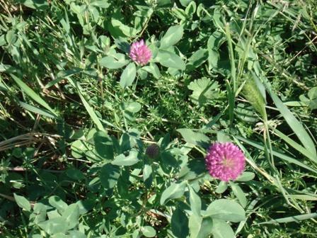 Цветы дикорастущие краснодарского края 87