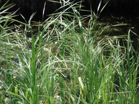трава костёр фото