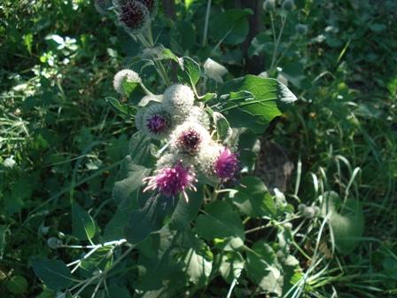 Цветы дикорастущие краснодарского края 100