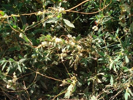 Цветы дикорастущие краснодарского края 78