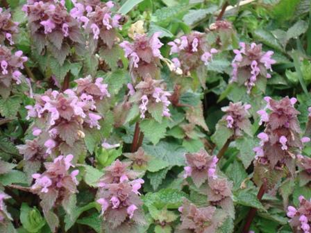 Цветы дикорастущие краснодарского края 53