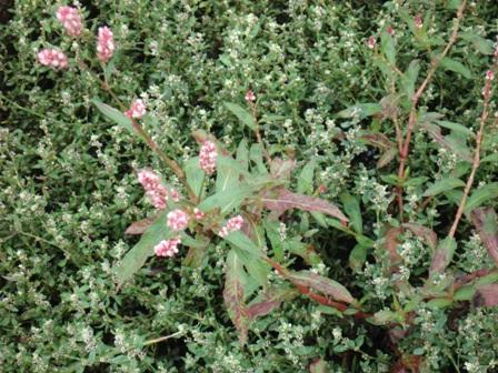 Цветы дикорастущие краснодарского края 91